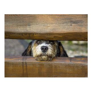 Petit Basset dog cute photo postcard