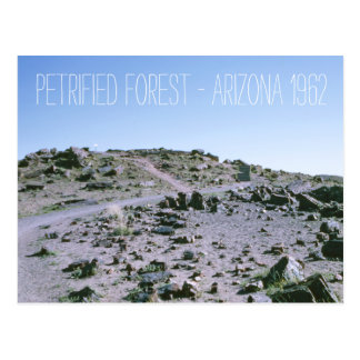 Petrified Forest Arizona 1962 Postcard