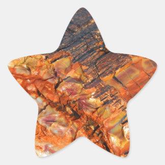 Petrified Wood Star Sticker