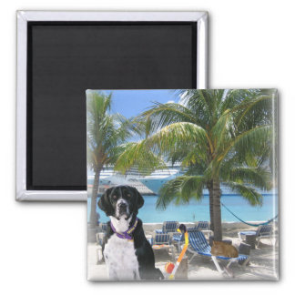 Pets on Vacation Magnet