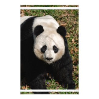 Petulant Panda Bear Stationery Paper
