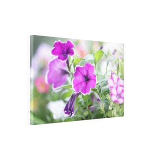 Petunia flowers canvas print