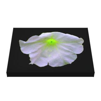 Petunia Green Glow Canvas Print