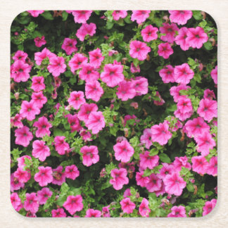 Petunias and lawn square paper coaster