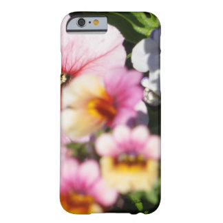 Petunias and Nemesia Barely There iPhone 6 Case