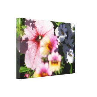 Petunias and Nemesia Canvas Print