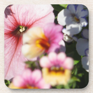 Petunias and Nemesia Coaster