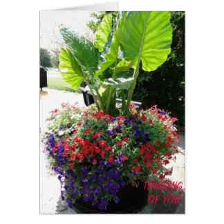 Petunias & Elephant Ear, Thinking of You Card