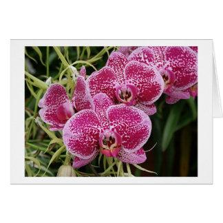 Phalaenopsis Card