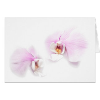 Phalaenopsis Hilo Lip Flower Duo Card