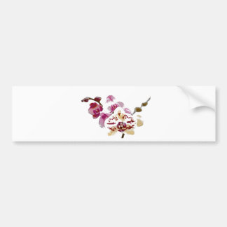 Phalaenopsis Orchid Flower Bouquet Bumper Sticker