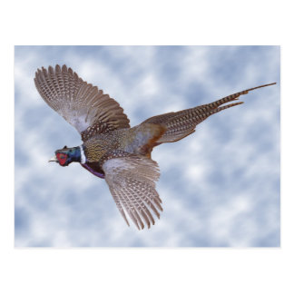 Pheasant In Flight Postcard