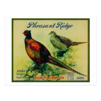 Pheasant Ridge Apple Crate Label Postcard