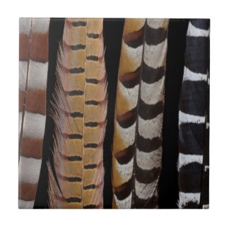 Pheasant tail feathers tile