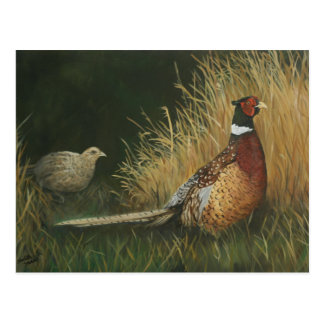 Pheasants in the Field Art Postcard