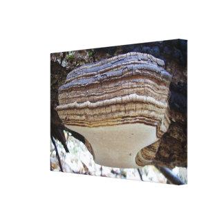 Phellinus igniarius Mushroom Canvas Print