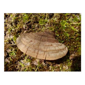Phellinus igniarius Mushroom Postcard