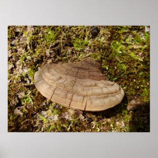 Phellinus igniarius Mushroom Poster