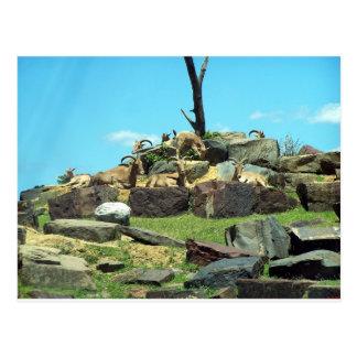 Philadelphia Zoo Postcard