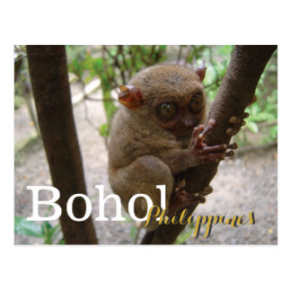 Philippine Tarsier from Bohol Postcard