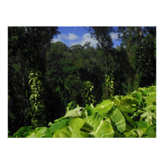 Philodendron Vines Poster