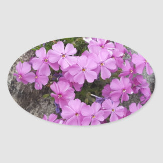 Phlox Dark Pink Oval Sticker