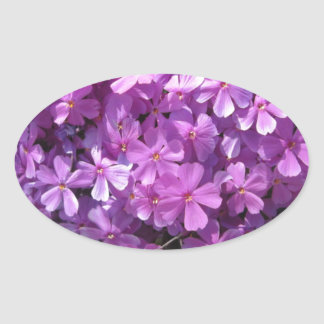 Phlox Dark Pink Pretty Oval Sticker