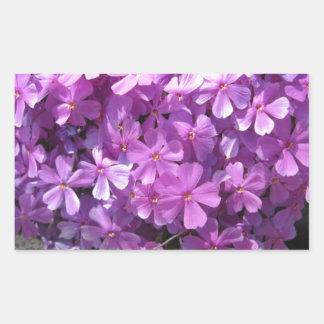 Phlox Dark Pink Pretty Rectangular Sticker