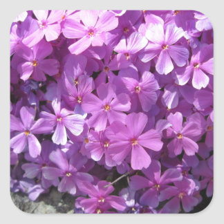 Phlox Dark Pink Pretty Square Sticker