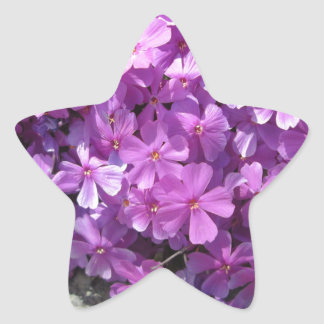 Phlox Dark Pink Pretty Star Sticker