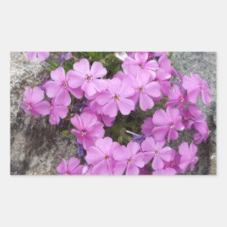 Phlox Dark Pink Rectangular Sticker