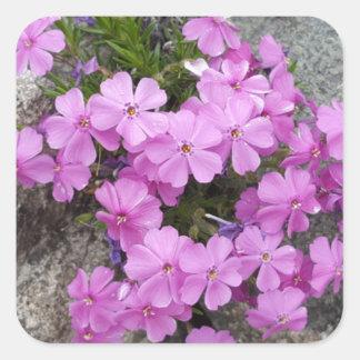 Phlox Dark Pink Square Sticker