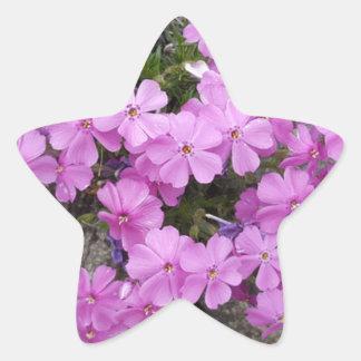 Phlox Dark Pink Star Sticker