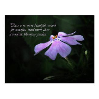 Phlox Garden Motivational Quote Postcard