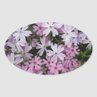 Phlox Light Pink Oval Sticker