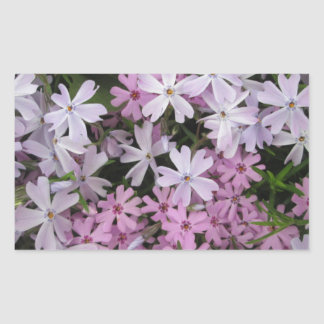Phlox Light Pink Rectangular Sticker