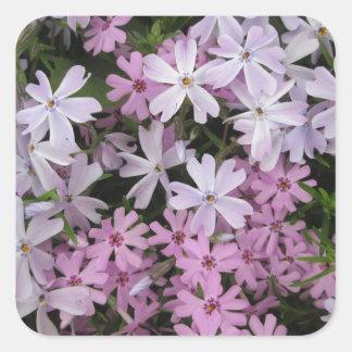 Phlox Light Pink Square Sticker