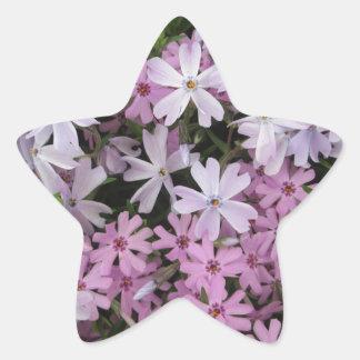 Phlox Light Pink Star Sticker