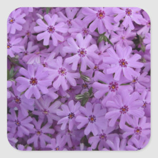 Phlox Purple Square Sticker