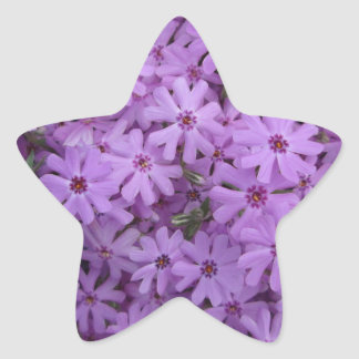 Phlox Purple Star Sticker