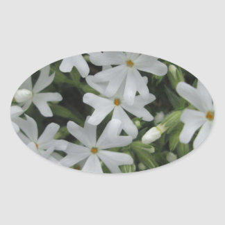 Phlox White Oval Sticker