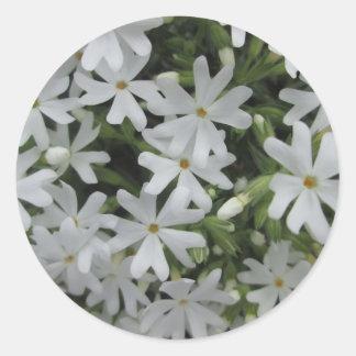 Phlox White Round Sticker