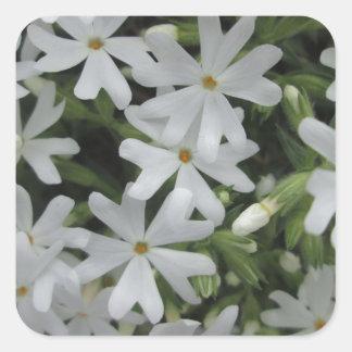 Phlox White Square Sticker