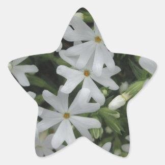 Phlox White Star Sticker