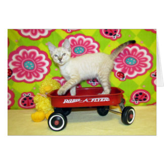 Phoenix and the Radio Flyer Greeting Card