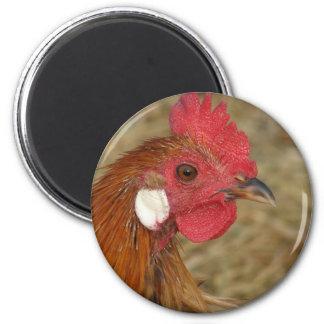 Phoenix Rooster 6 Cm Round Magnet
