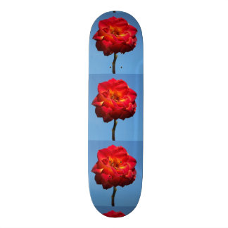 Phoenix Rose in the Sky-skateboard