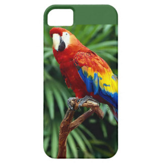 Phone cover with picture of beautiful parrot case for the iPhone 5