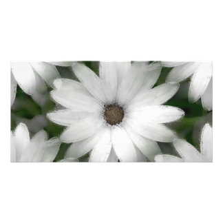 Photo Card - African Daisy in White