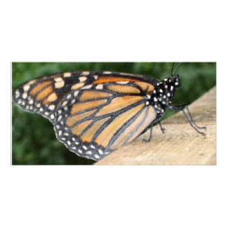 Photo Card - Monarch Butterfly